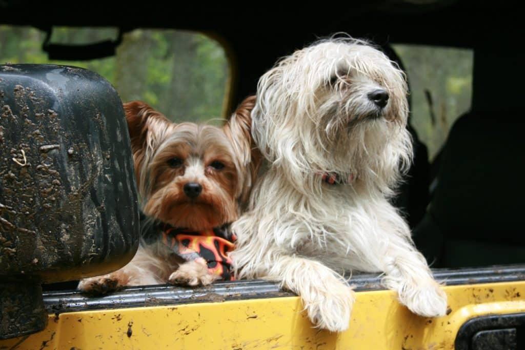 Cestovanie so psom v aute